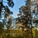 Прибрежный лес